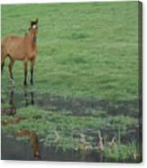 Idaho Farm Horse1 Canvas Print