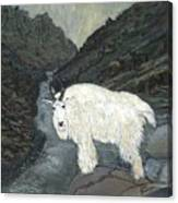 Idaho Mountain Goat Canvas Print