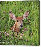 Id'st Hiding In The Flowers Canvas Print
