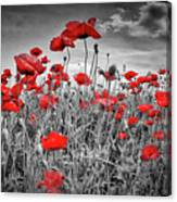 Idyllic Field Of Poppies Colorkey Canvas Print