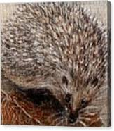 Igel Im Herbst   Hedgehog In Autumn Canvas Print