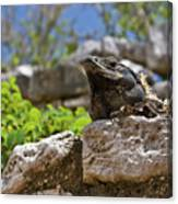 Iguana At Talum Ruins Mexico Canvas Print