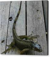 Iguana At The Ready Canvas Print