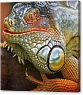 Iguana Full Of Color Canvas Print