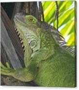 Iguana Puerto Rico Canvas Print