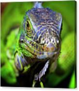 Iguana Stare Canvas Print