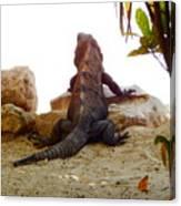 Iguana Watchout Canvas Print
