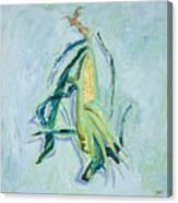 Illinois Corn Canvas Print
