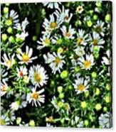 Illinois Wildflowers 1 Canvas Print
