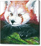 Illlustration Of Red Panda On Branch Drawn With Faber Castell Pi Canvas Print