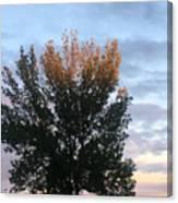 Illuminated Tree Top Canvas Print