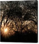 Illuminating Through Trees  Canvas Print
