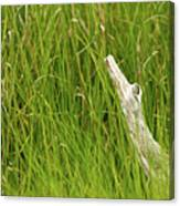 Illusions In The Grass Canvas Print