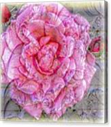 Illustration Rose Pink Canvas Print