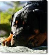 I'm Bored Rottie Canvas Print