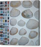 Images And Shells Canvas Print
