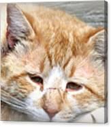 Img_0001 Cat Canvas Print