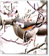 Img_0001 - Tufted Titmouse Canvas Print