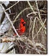 Img_0806 - Northern Cardinal Canvas Print