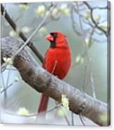 Img_0999-001 - Northern Cardinal Canvas Print