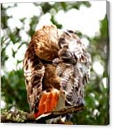 Img_1049-006 - Red-tailed Hawk Canvas Print