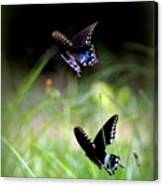 Img_1521 - Butterfly Canvas Print