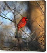 Img_2866-001 -  Northern Cardinal Canvas Print