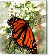 Img_5284-001 - Butterfly Canvas Print
