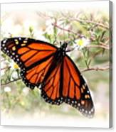 Img_5290-004 - Butterfly Canvas Print