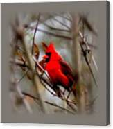 Img_9241 - Northern Cardinal Canvas Print