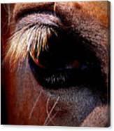 Img_9984 - Horse Canvas Print