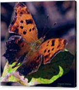 Imperfect Satyr Comma Canvas Print