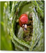 Imposter Ladybug Canvas Print