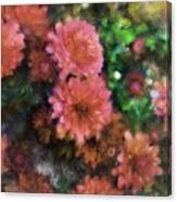 Bronze And Pink Mums Canvas Print