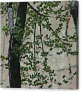 Impression Of Wall And Trees Canvas Print
