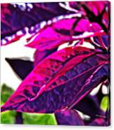 Impressionistic Purple Leaves Canvas Print