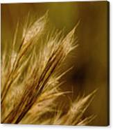 In An Autumn Field - Golden Macro Canvas Print
