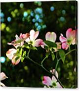 In Another Spring 2013 002 Canvas Print