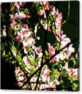 In Another Spring 2013 005 Canvas Print