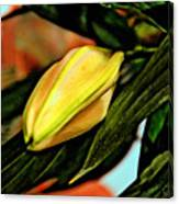 In Bud. Canvas Print