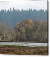 In Company Of Alders Canvas Print