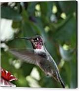 In Flight Meal Canvas Print