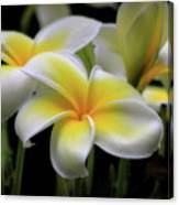 In Love With Butterflies Plumeria Flower Cecil B Day Butterfly Center Art Canvas Print