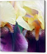 In Love With Iris Canvas Print