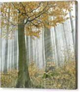 In Mist 1 Canvas Print