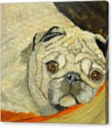 In My Dog Bed Canvas Print