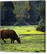 in New Forest Canvas Print