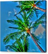 In Palms View Canvas Print