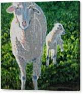In Sheep's Clothing Canvas Print