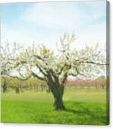 In Spring's Embrace Canvas Print